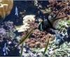 Vign_Aquarium-079