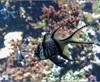 Vign_Aquarium-080
