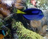 Vign_Aquarium-085