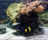 Vign_Aquarium-093