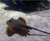 Vign_Aquarium-094