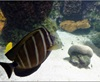 Vign_Aquarium-095