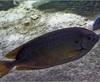 Vign_Aquarium-097