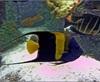 Vign_Aquarium-099