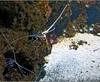 Vign_Aquarium-103