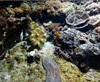 Vign_Aquarium-104