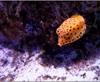 Vign_Aquarium-105