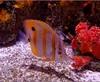 Vign_Aquarium-106