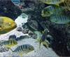 Vign_Aquarium-111