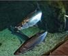 Vign_Aquarium-118