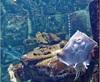 Vign_Aquarium-119